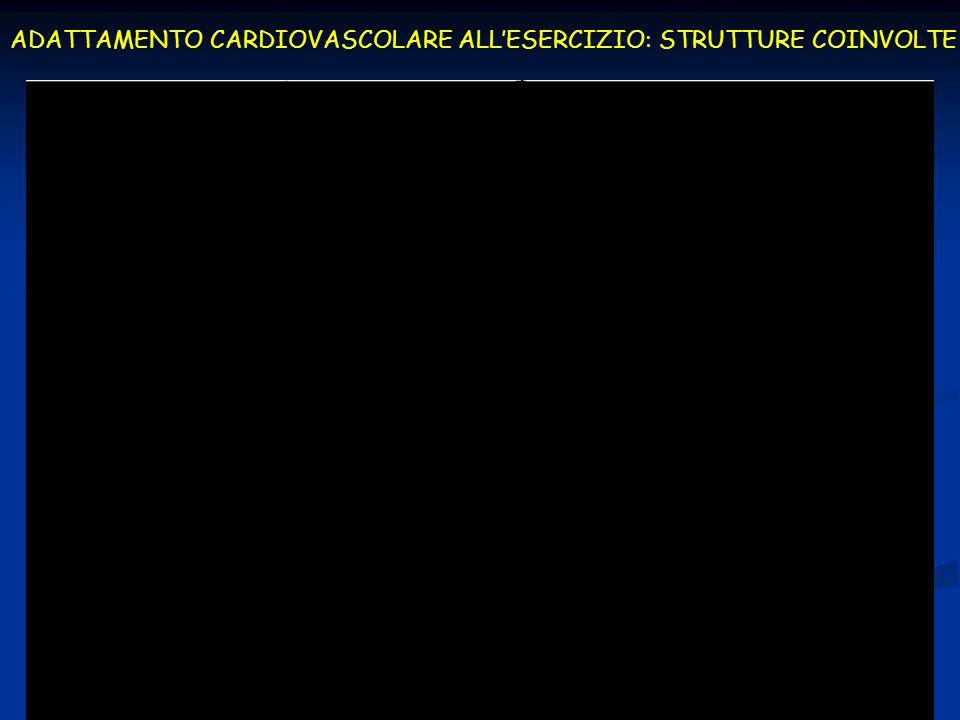 ADATTAMENTO CARDIOVASCOLARE ALLESERCIZIO: STRUTTURE COINVOLTE