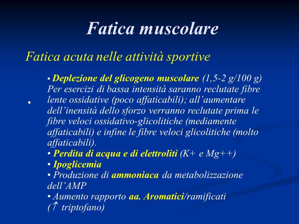 Fatica muscolare Fatica acuta nelle attività sportive Deplezione del glicogeno muscolare (1,5-2 g/100 g) Per esercizi di bassa intensità saranno reclutate fibre lente ossidative (poco affaticabili); allaumentare dellinensità dello sforzo verranno reclutate prima le fibre veloci ossidativo-glicolitiche (mediamente affaticabili) e infine le fibre veloci glicolitiche (molto affaticabili).