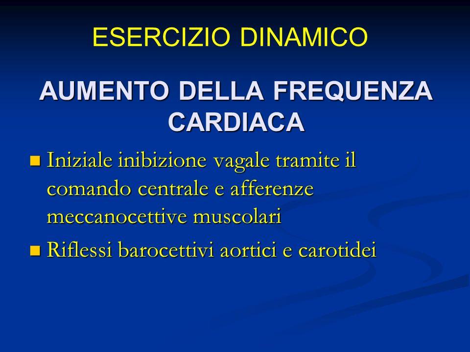 AUMENTO DELLA FREQUENZA CARDIACA Iniziale inibizione vagale tramite il comando centrale e afferenze meccanocettive muscolari Iniziale inibizione vagale tramite il comando centrale e afferenze meccanocettive muscolari Riflessi barocettivi aortici e carotidei Riflessi barocettivi aortici e carotidei ESERCIZIO DINAMICO