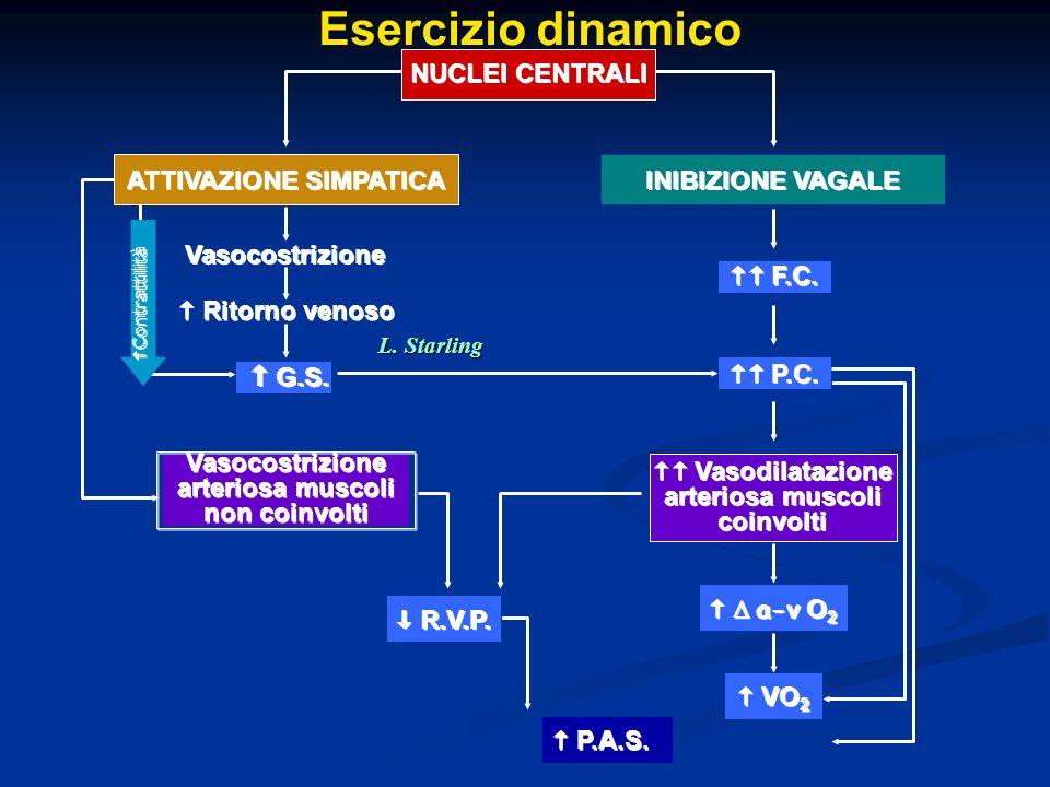 Esercizio dinamico NUCLEI CENTRALI ATTIVAZIONE SIMPATICA INIBIZIONE VAGALE Vasocostrizione F.C.