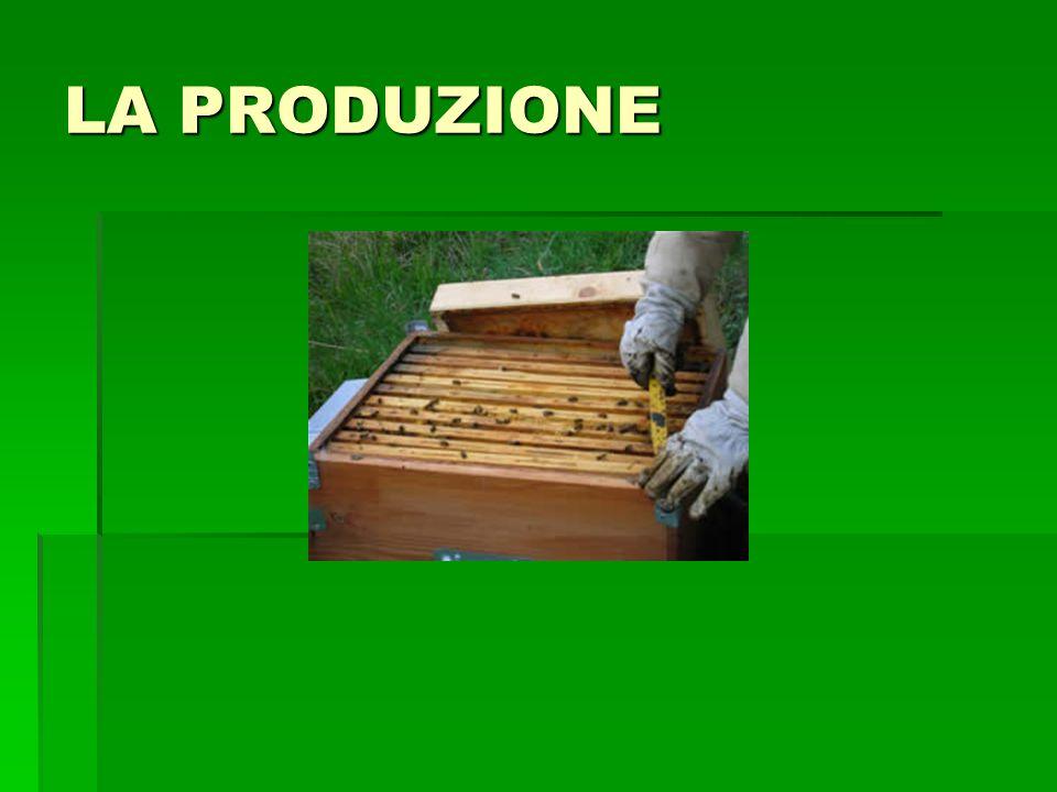 Tecnica apisticaPossibile danno al miele Posizionamento degli alveari in zone densamente urbanizzate o industrializzate o comunque soggette a forte inquinamento ambientale (anche da pesticidi per uso agricolo) Contaminazione del miele con residui di sostanze nocive alla salute o con sostanze zuccherine diverse da nettare e melata Utilizzo improprio di sostanze antibiotiche o disinfestanti per combattere o prevenire avversità delle api Contaminazione del miele con residui di dette sostanze Utilizzo di sostanze organiche quali naftalina o p- diclorobenzolo per la protezione dalla tarma della cera dei favi immagazzinati Contaminazione del miele con residui di dette sostanze Utilizzo di repellenti chimici per allontanare le api dal melario Contaminazione del miele con residui di dette sostanze Utilizzo di fumo inadeguato per quantità o tipo di materiale combusto Odore e sapore di fumo del miele prodotto, impurità microscopiche di fuliggine Utilizzo di favi vecchi e scuri e che abbiano contenuto covata Miele con colore più scuro, odore di favo , acidità più elevata, invecchiamento più rapido Utilizzo di favi da melario contenenti residui di miele dell anno precedente Miele con contenuto in lieviti elevato e quindi maggiormente soggetto a fermentazione; cristallizzazione prematura di mieli tendenzialmente liquidi Prelievo dei favi durante il flusso nettariferoEccesso di umidità Prelievo di favi non completamente opercolatiEccesso di umidità Tecniche apistiche e relativi effetti negativi