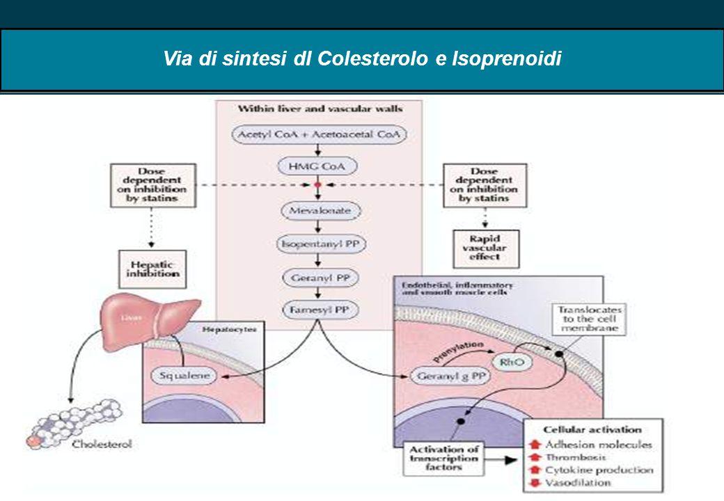 51 Via di sintesi dl Colesterolo e Isoprenoidi