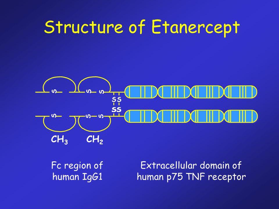 Fc region of human IgG1 Extracellular domain of human p75 TNF receptor S S S S SS S S S S S S CH 3 CH 2 SSSS Structure of Etanercept