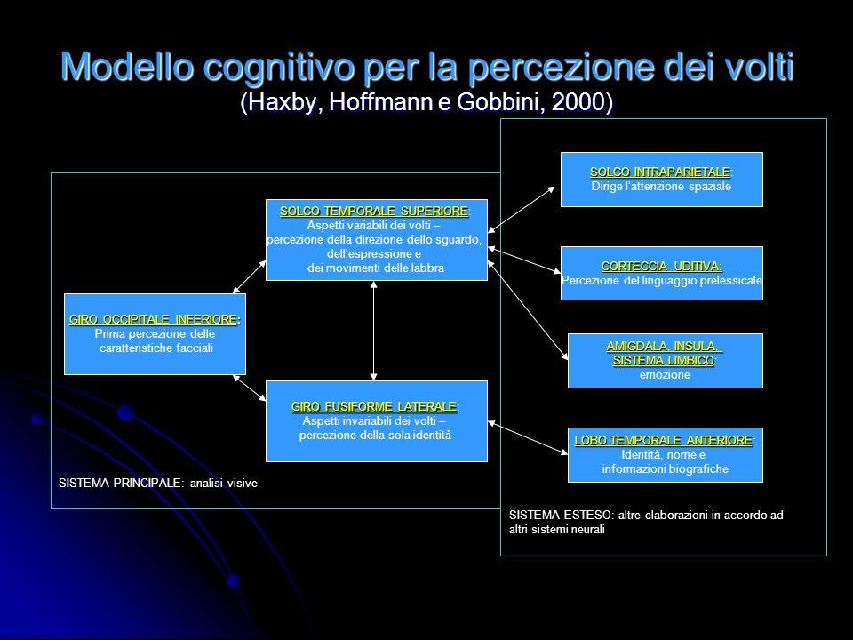 SISTEMA ESTESO: altre elaborazioni in accordo ad altri sistemi neurali SISTEMA PRINCIPALE: analisi visive Modello cognitivo per la percezione dei volt