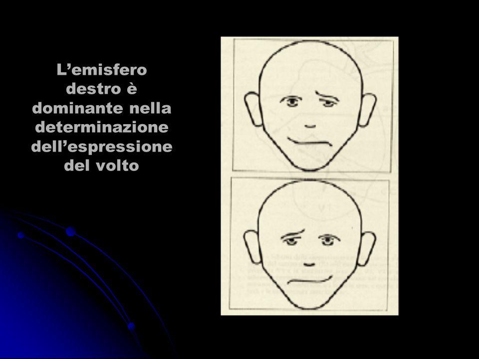 Lemisfero destro è dominante nella determinazione dellespressione del volto