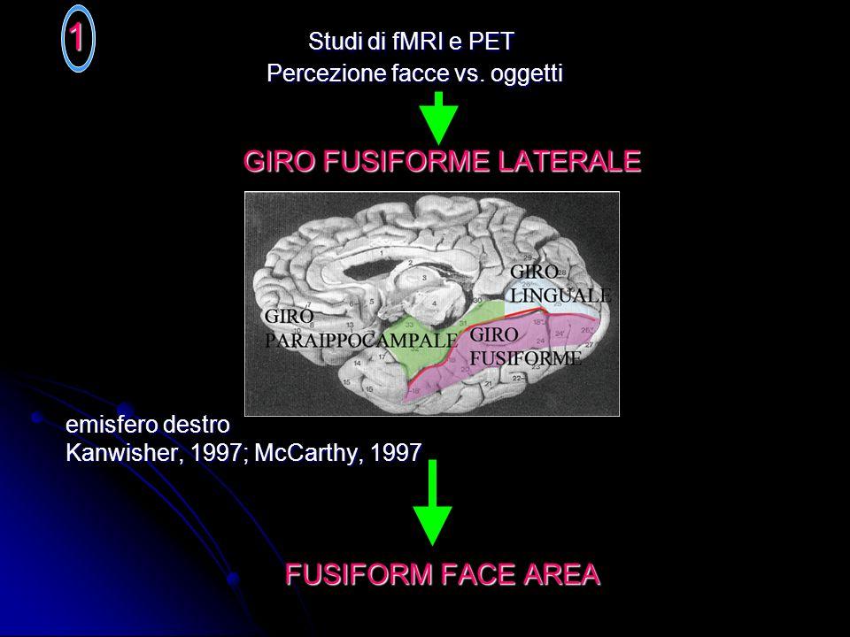 1 Studi di fMRI e PET Percezione facce vs. oggetti Percezione facce vs. oggetti GIRO FUSIFORME LATERALE emisfero destro Kanwisher, 1997; McCarthy, 199