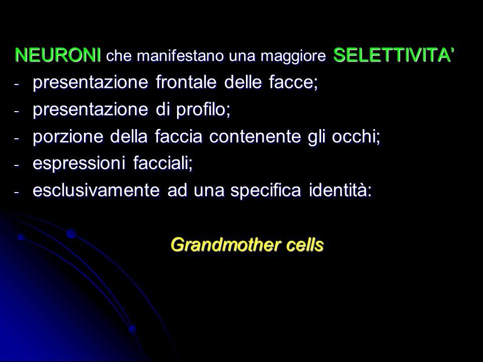 NEURONI che manifestano una maggiore SELETTIVITA - presentazione frontale delle facce; - presentazione di profilo; - porzione della faccia contenente