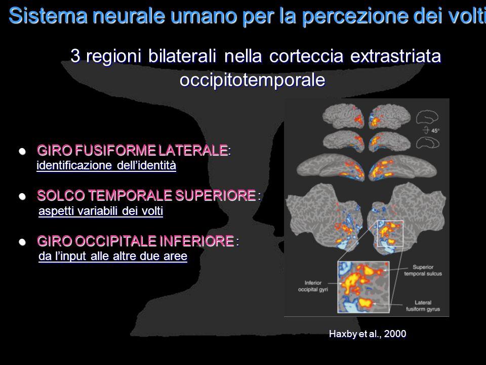 Sistema neurale umano per la percezione dei volti GIRO FUSIFORME LATERALE : GIRO FUSIFORME LATERALE : identificazione dellidentità SOLCO TEMPORALE SUP