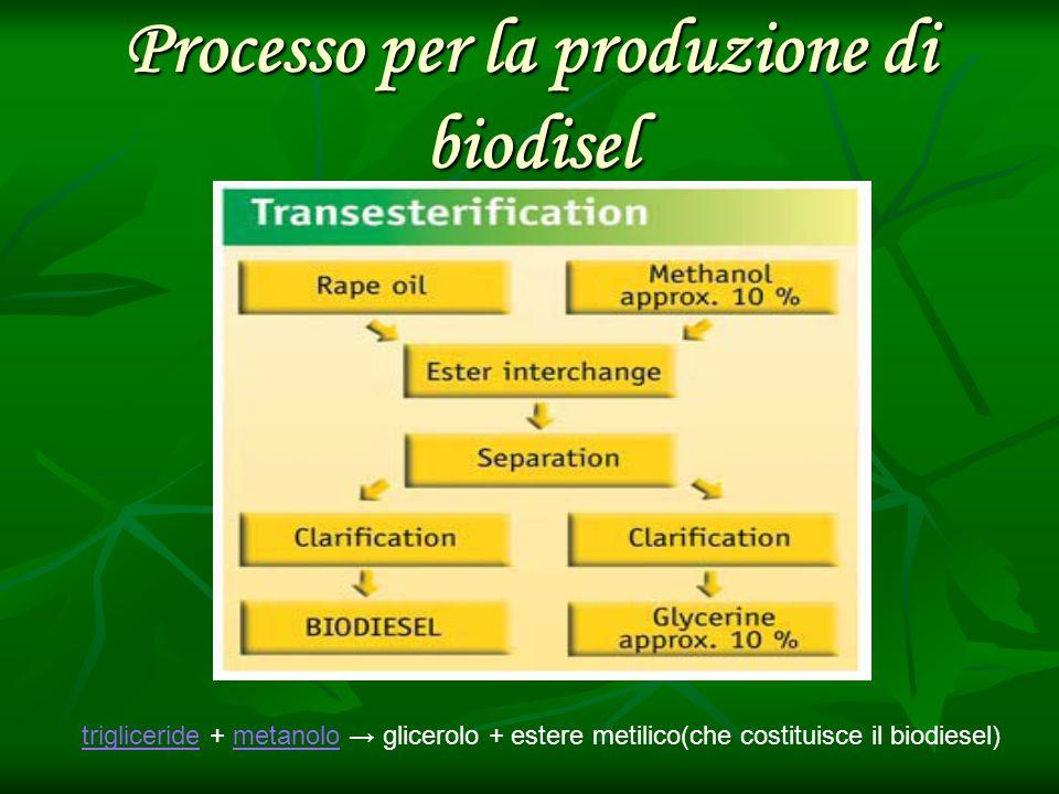 Processo per la produzione di biodisel trigliceridetrigliceride + metanolo glicerolo + estere metilico(che costituisce il biodiesel)metanolo
