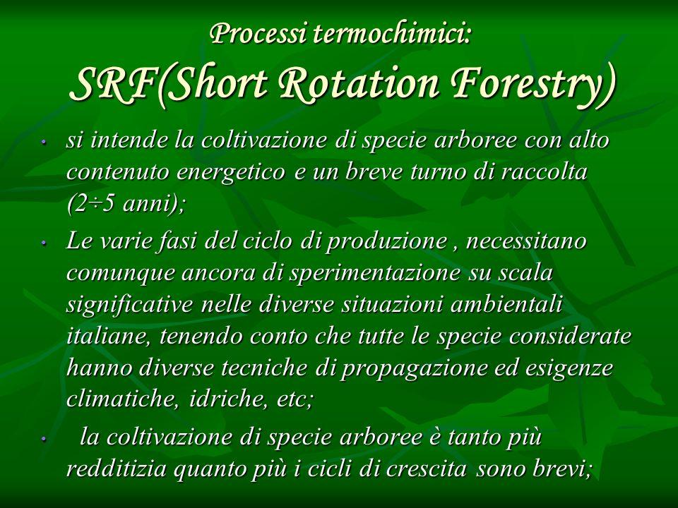 Processi termochimici: SRF(Short Rotation Forestry) si intende la coltivazione di specie arboree con alto contenuto energetico e un breve turno di rac