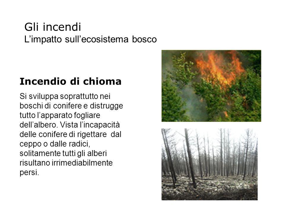 Gli incendi Limpatto sullecosistema bosco Incendio di chioma Si sviluppa soprattutto nei boschi di conifere e distrugge tutto lapparato fogliare della