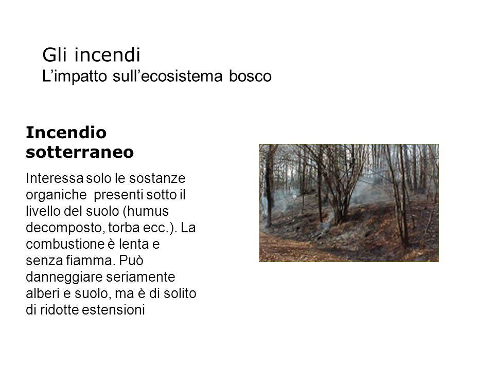 Incendio sotterraneo Interessa solo le sostanze organiche presenti sotto il livello del suolo (humus decomposto, torba ecc.). La combustione è lenta e