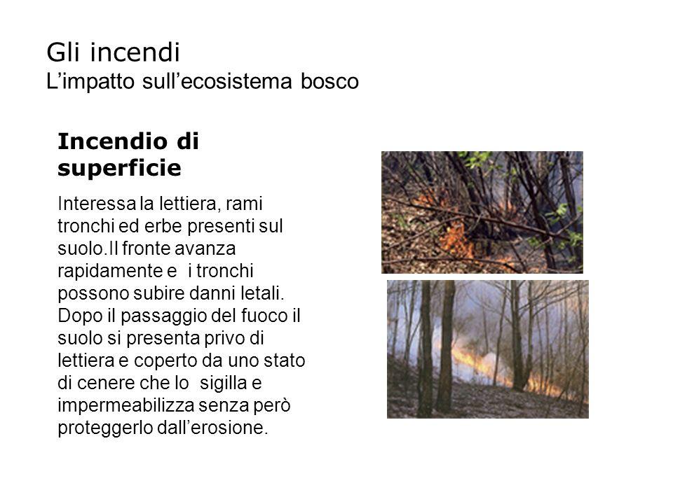 Incendio di superficie Interessa la lettiera, rami tronchi ed erbe presenti sul suolo.Il fronte avanza rapidamente e i tronchi possono subire danni le