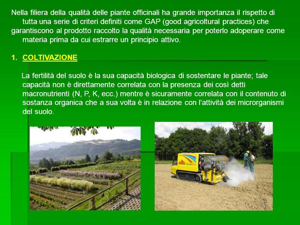 Nella filiera della qualità delle piante officinali ha grande importanza il rispetto di tutta una serie di criteri definiti come GAP (good agricoltura