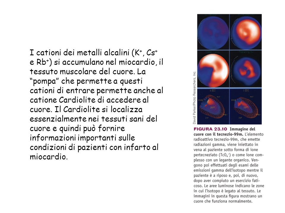 I cationi dei metalli alcalini (K +, Cs + e Rb + ) si accumulano nel miocardio, il tessuto muscolare del cuore.