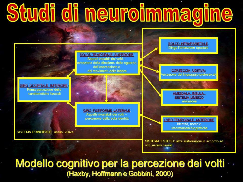 Modello cognitivo per la percezione dei volti (Haxby, Hoffmann e Gobbini, 2000) SISTEMA ESTESO: altre elaborazioni in accordo ad altri sistemi neurali