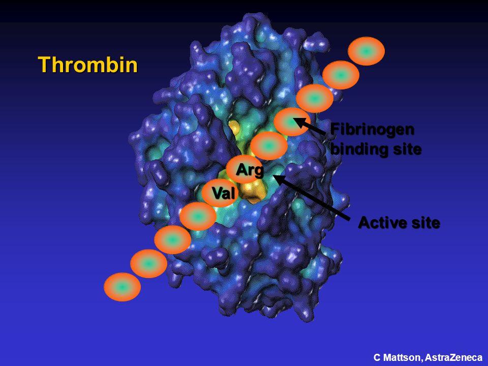 Thrombin Active site Val Arg Fibrinogen binding site C Mattson, AstraZeneca