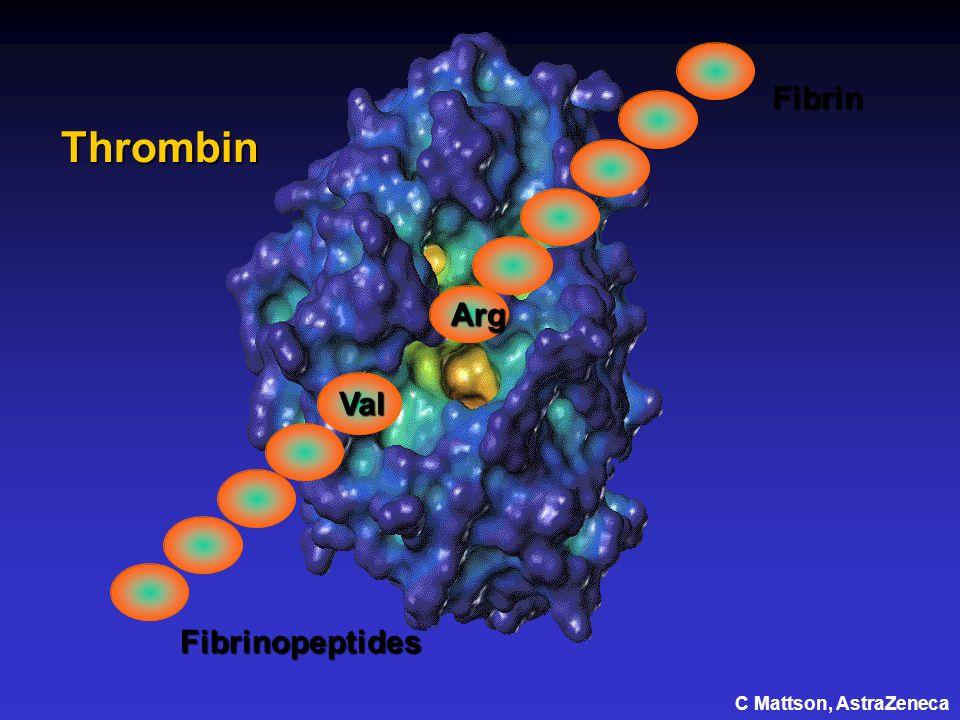 Val Arg Fibrin Fibrinopeptides Thrombin