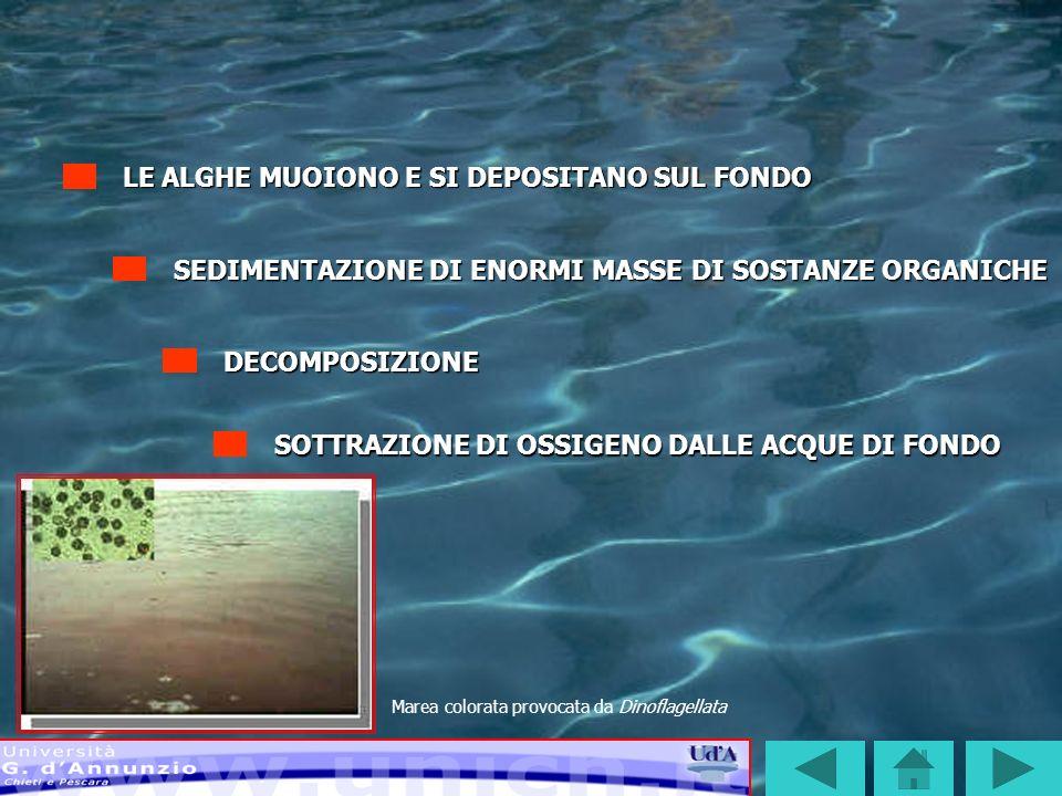 SOTTRAZIONE DI OSSIGENO ALLE ACQUE DI FONDO SI VERIFICANO, COSÌ, CASI DI IPOSSIA O NEI CASI PEGGIORI DI ANOSSIA LE CONDIZIONI DI ANOSSIA SI SVILUPPANO IN GENERE IN ESTATE: Le basse temperature invernali rallentano i processi metabolici di degradazione In estate le condizioni meteo-marine favoriscono il fenomeno della stratificazione delle acque
