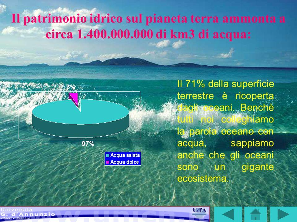 LA CATENA ALIMENTARE MARINA La catena alimentare marina: ogni specie ciba quella a lei superiore Come per le piante e gli animali sulla terra, esistono anche le catene alimentari marine.