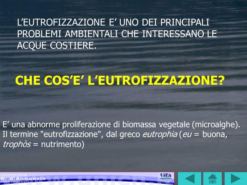 CICLO DELLEUTROFIZZAZIONE AUMENTO DEI NUTRIENTI IN MARE AUMENTO DEI NUTRIENTI IN MARE SVILUPPO DI FIORITURE MICROALGALI SVILUPPO DI FIORITURE MICROALGALI LE ALGHE MUOIONO E SI DEPOSITANO SUL FONDO LE ALGHE MUOIONO E SI DEPOSITANO SUL FONDO LA DECOMPOSIZIONE DELLE ALGHE MORTE SOTTRAE OSSIGENO ALLE ACQUE DI FONDO LA DECOMPOSIZIONE DELLE ALGHE MORTE SOTTRAE OSSIGENO ALLE ACQUE DI FONDO GLI ORGANISMI BENTONICI MUOIONO O MIGRANO GLI ORGANISMI BENTONICI MUOIONO O MIGRANO SI MODIFICA LA COMPOSIZIONE DELLE BIOCENESI DI FONDO SI MODIFICA LA COMPOSIZIONE DELLE BIOCENESI DI FONDO