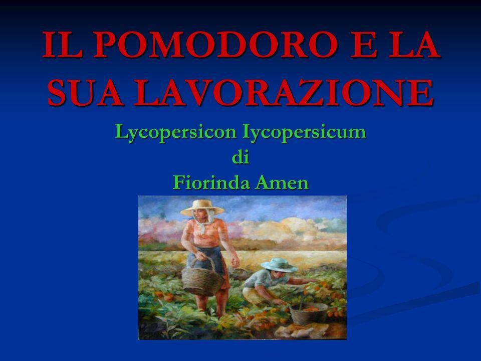 IL POMODORO E LA SUA LAVORAZIONE Lycopersicon Iycopersicum di Fiorinda Amen