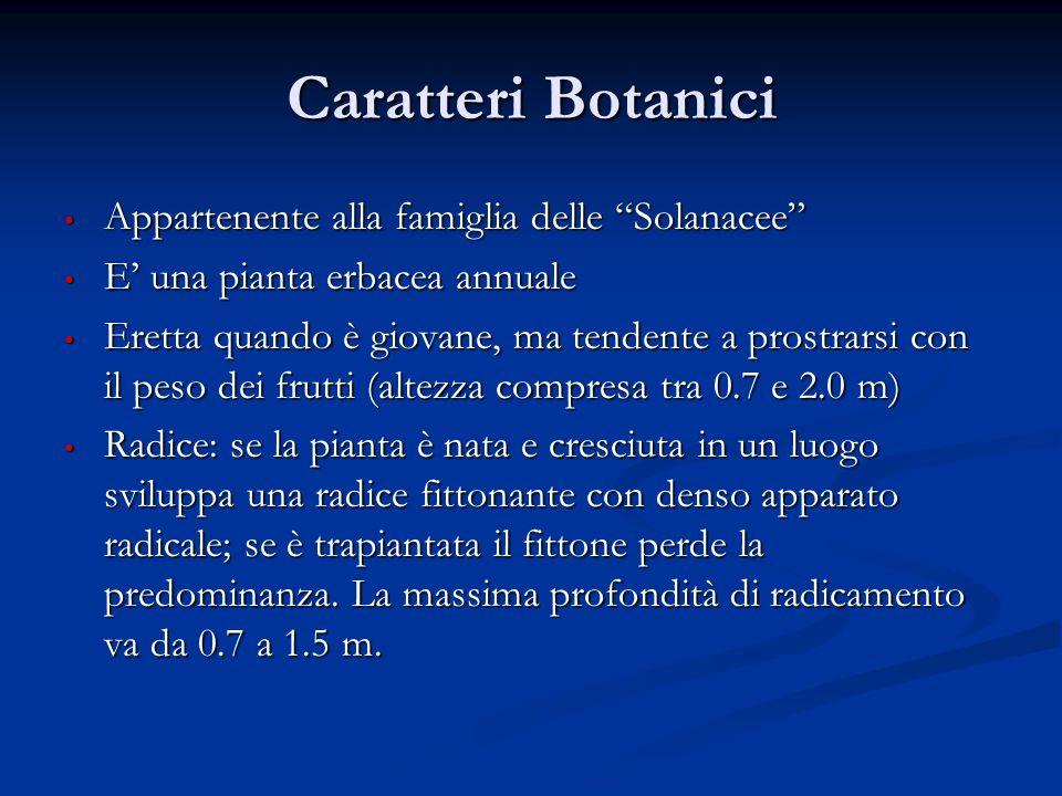 Caratteri Botanici Appartenente alla famiglia delle Solanacee Appartenente alla famiglia delle Solanacee E una pianta erbacea annuale E una pianta erb