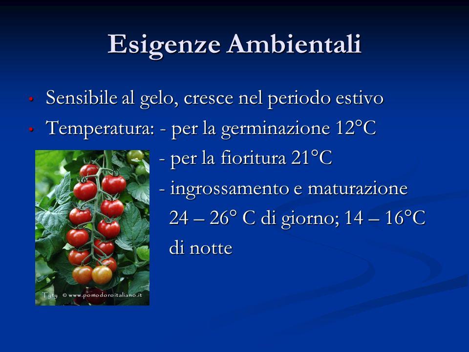 Esigenze Ambientali Sensibile al gelo, cresce nel periodo estivo Sensibile al gelo, cresce nel periodo estivo Temperatura: - per la germinazione 12°C Temperatura: - per la germinazione 12°C - per la fioritura 21°C - per la fioritura 21°C - ingrossamento e maturazione - ingrossamento e maturazione 24 – 26° C di giorno; 14 – 16°C 24 – 26° C di giorno; 14 – 16°C di notte di notte