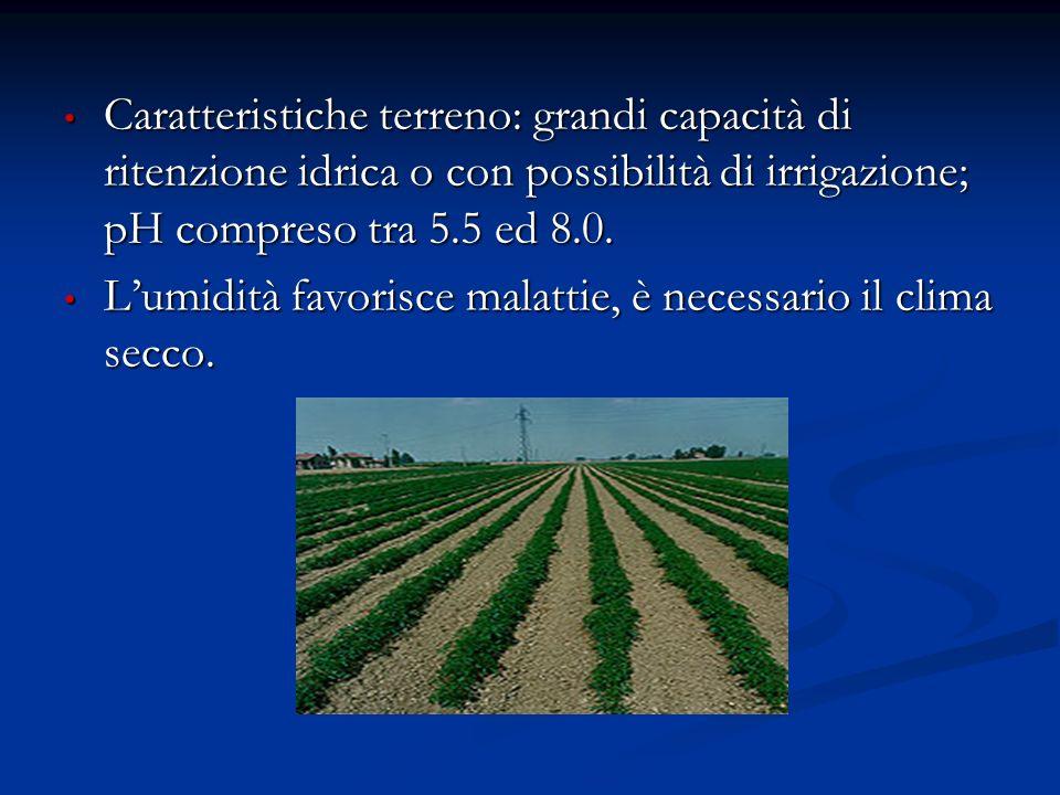 Caratteristiche terreno: grandi capacità di ritenzione idrica o con possibilità di irrigazione; pH compreso tra 5.5 ed 8.0. Caratteristiche terreno: g