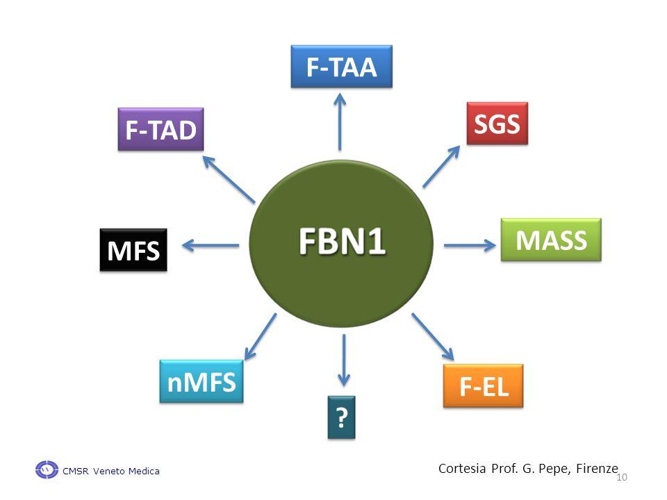 MFS MASS SGS F-TAA F-TAD nMFS F-EL Cortesia Prof. G. Pepe, Firenze CMSR Veneto Medica 10