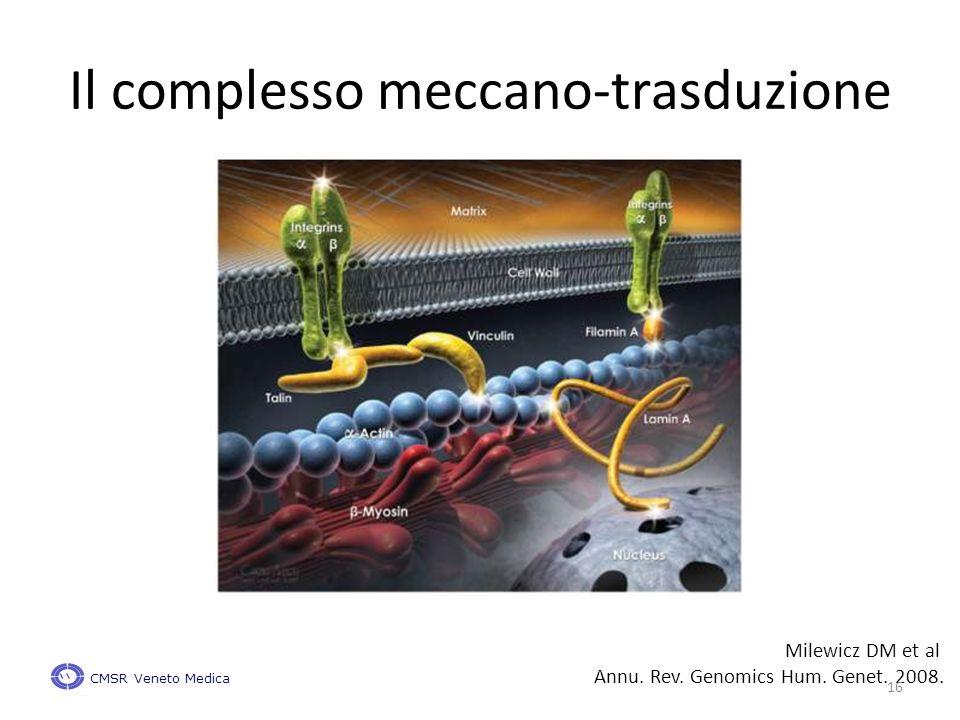 Il complesso meccano-trasduzione Milewicz DM et al Annu.
