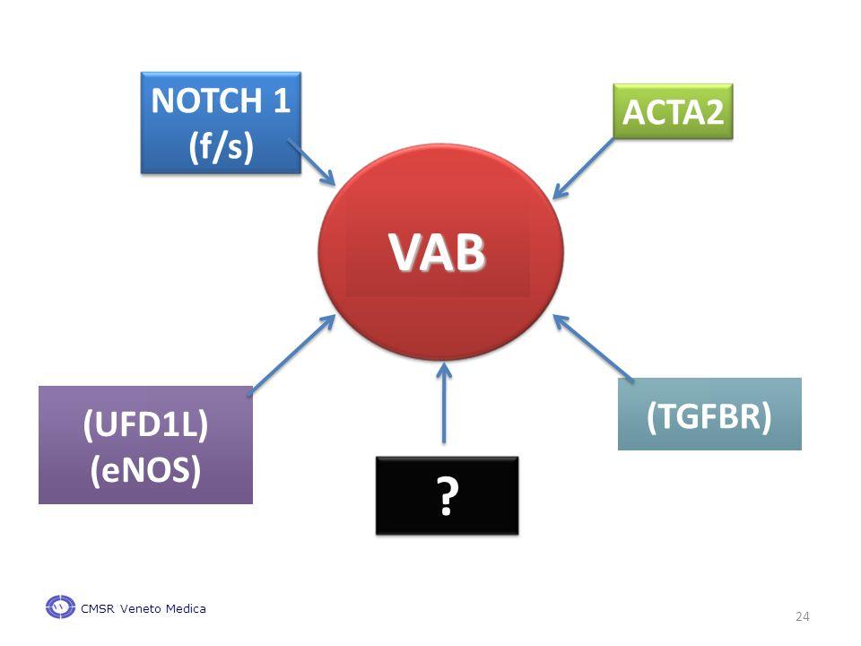 ACTA2 NOTCH 1 (f/s) VAB (TGFBR) (UFD1L) (eNOS) CMSR Veneto Medica 24