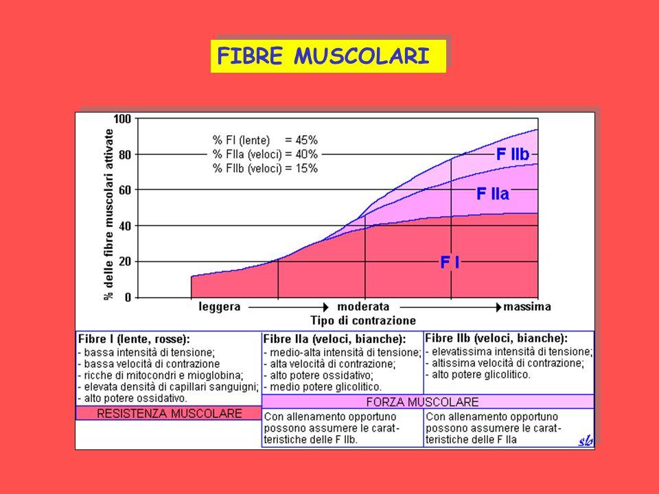 FIBRE MUSCOLARI