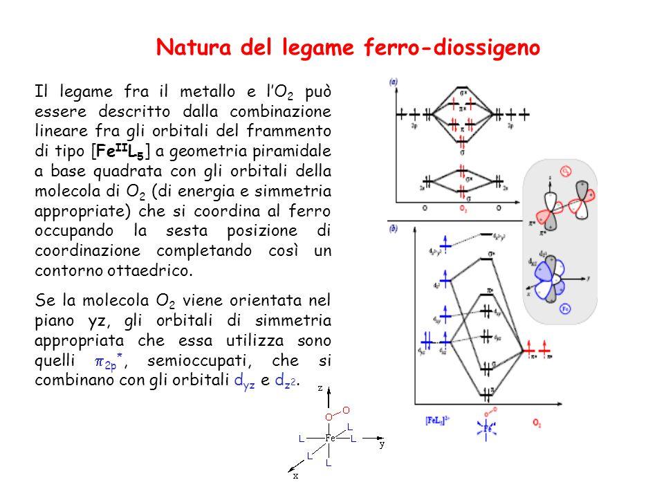 Natura del legame ferro-diossigeno Il legame fra il metallo e lO 2 può essere descritto dalla combinazione lineare fra gli orbitali del frammento di tipo [Fe II L 5 ] a geometria piramidale a base quadrata con gli orbitali della molecola di O 2 (di energia e simmetria appropriate) che si coordina al ferro occupando la sesta posizione di coordinazione completando così un contorno ottaedrico.