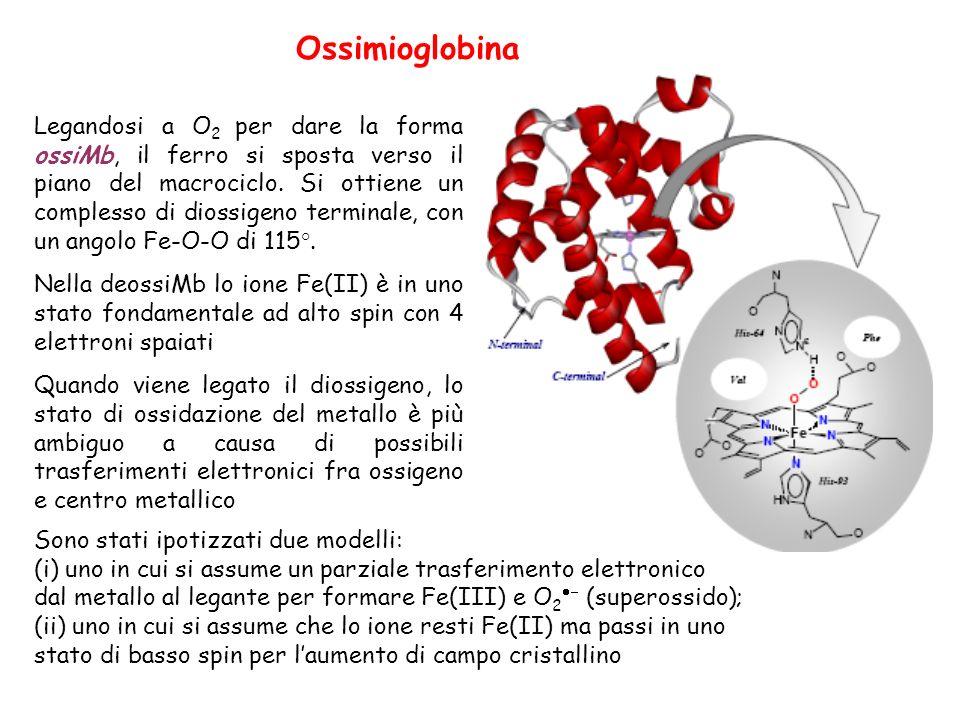 Ossimioglobina Legandosi a O 2 per dare la forma ossiMb, il ferro si sposta verso il piano del macrociclo.