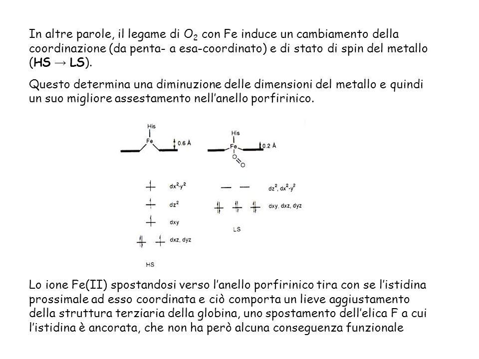 In altre parole, il legame di O 2 con Fe induce un cambiamento della coordinazione (da penta- a esa-coordinato) e di stato di spin del metallo (HS LS).