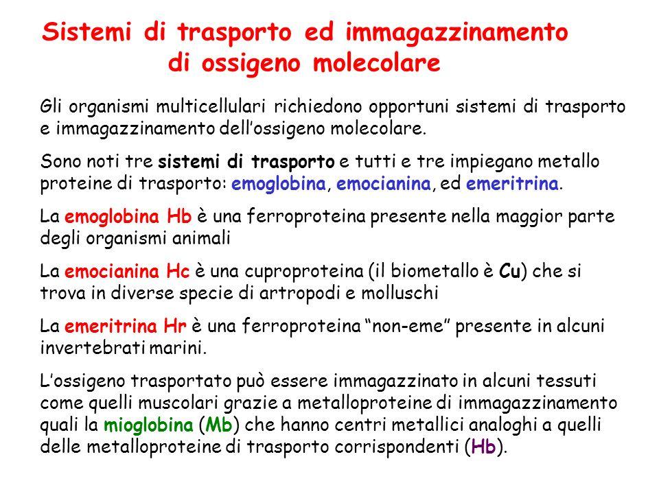 Sistemi di trasporto ed immagazzinamento di ossigeno molecolare Gli organismi multicellulari richiedono opportuni sistemi di trasporto e immagazzinamento dellossigeno molecolare.