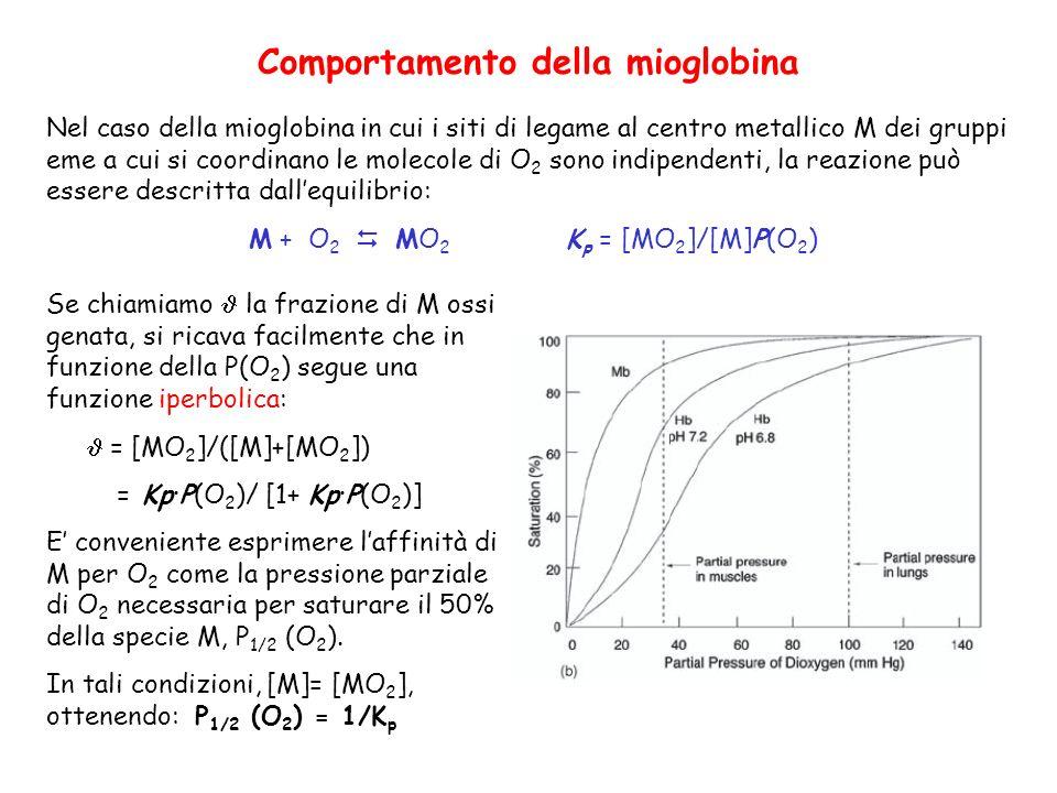 Comportamento della mioglobina Nel caso della mioglobina in cui i siti di legame al centro metallico M dei gruppi eme a cui si coordinano le molecole di O 2 sono indipendenti, la reazione può essere descritta dallequilibrio: M + O 2 MO 2 K p = [MO 2 ]/[M]P(O 2 ) Se chiamiamo la frazione di M ossi genata, si ricava facilmente che in funzione della P(O 2 ) segue una funzione iperbolica: = [MO 2 ]/([M]+[MO 2 ]) = Kp·P(O 2 )/ [1+ Kp·P(O 2 )] E conveniente esprimere laffinità di M per O 2 come la pressione parziale di O 2 necessaria per saturare il 50% della specie M, P 1/2 (O 2 ).