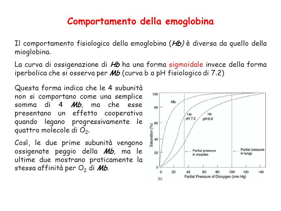 Comportamento della emoglobina Il comportamento fisiologico della emoglobina (Hb) è diversa da quello della mioglobina.