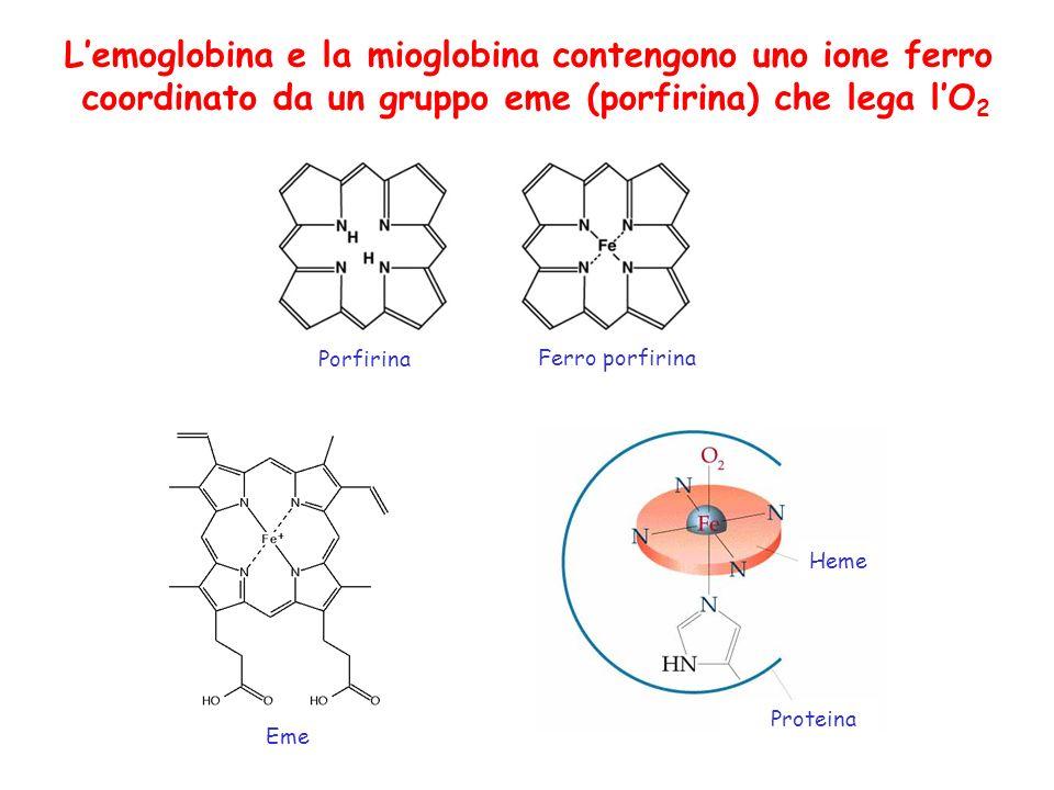 Lemoglobina e la mioglobina contengono uno ione ferro coordinato da un gruppo eme (porfirina) che lega lO 2 Porfirina Ferro porfirina Heme Proteina Eme