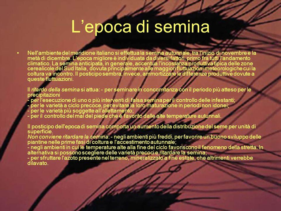 Lepoca di semina Nell'ambiente del meridione italiano si effettua la semina autunnale, tra linizio di novembre e la metà di dicembre. L'epoca migliore