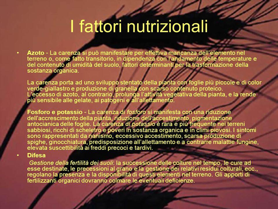 I fattori nutrizionali Azoto - La carenza si può manifestare per effettiva mancanza dellelemento nel terreno o, come fatto transitorio, in dipendenza