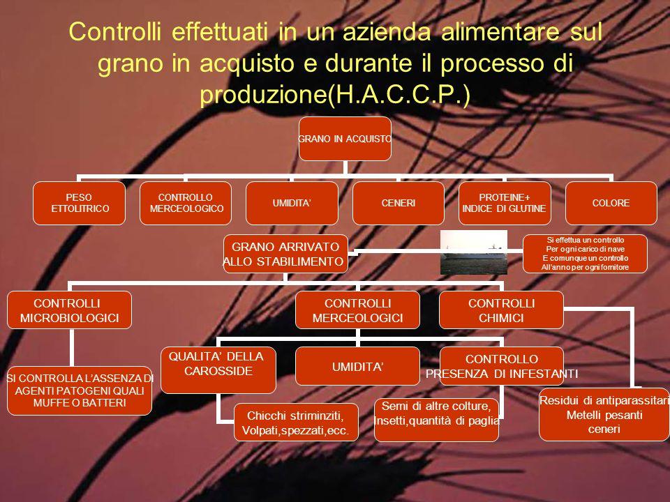Controlli effettuati in un azienda alimentare sul grano in acquisto e durante il processo di produzione(H.A.C.C.P.) GRANO IN ACQUISTO PESO ETTOLITRICO
