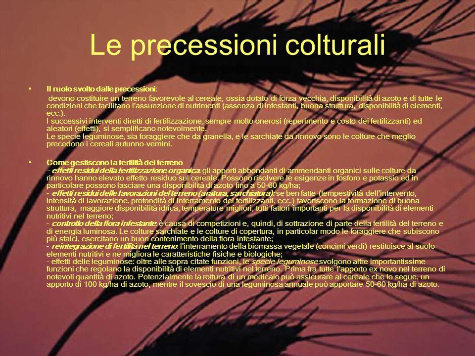 Le precessioni colturali Il ruolo svolto dalle precessioni: devono costituire un terreno favorevole al cereale, ossia dotato di forza vecchia, disponi