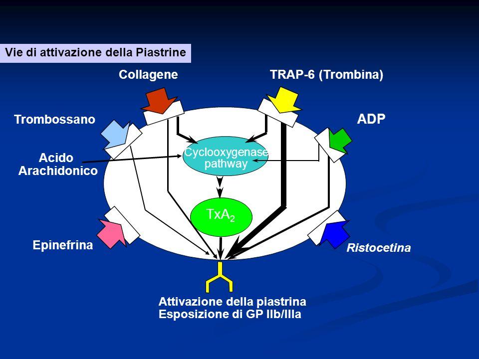 Cyclooxygenase pathway TxA 2 Attivazione della piastrina Esposizione di GP IIb/IIIa CollageneTRAP-6 (Trombina) ADP Ristocetina Acido Arachidonico Vie