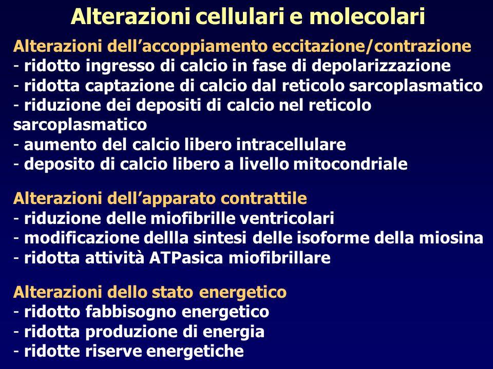 Alterazioni cellulari e molecolari Alterazioni dellaccoppiamento eccitazione/contrazione - ridotto ingresso di calcio in fase di depolarizzazione - ri