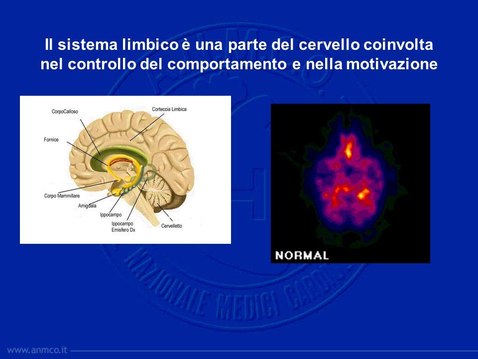 Il sistema limbico è una parte del cervello coinvolta nel controllo del comportamento e nella motivazione
