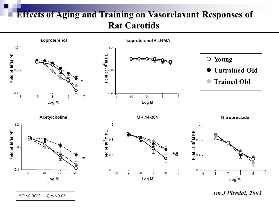 Rhodopsin Untrained Old Trained Old Young Untrained Old Beta Binding YoungUntrained OldTrained Old 0 10 20 fmol/mg * ARK Activity YoungUntrained OldTrained Old 0 2500 5000 7500 10000 Arbitrary Units * Effects of Aging and Training on Vascular AR Signalling Components of Rat Carotids Am J Physiol, 2003 * P <0.01