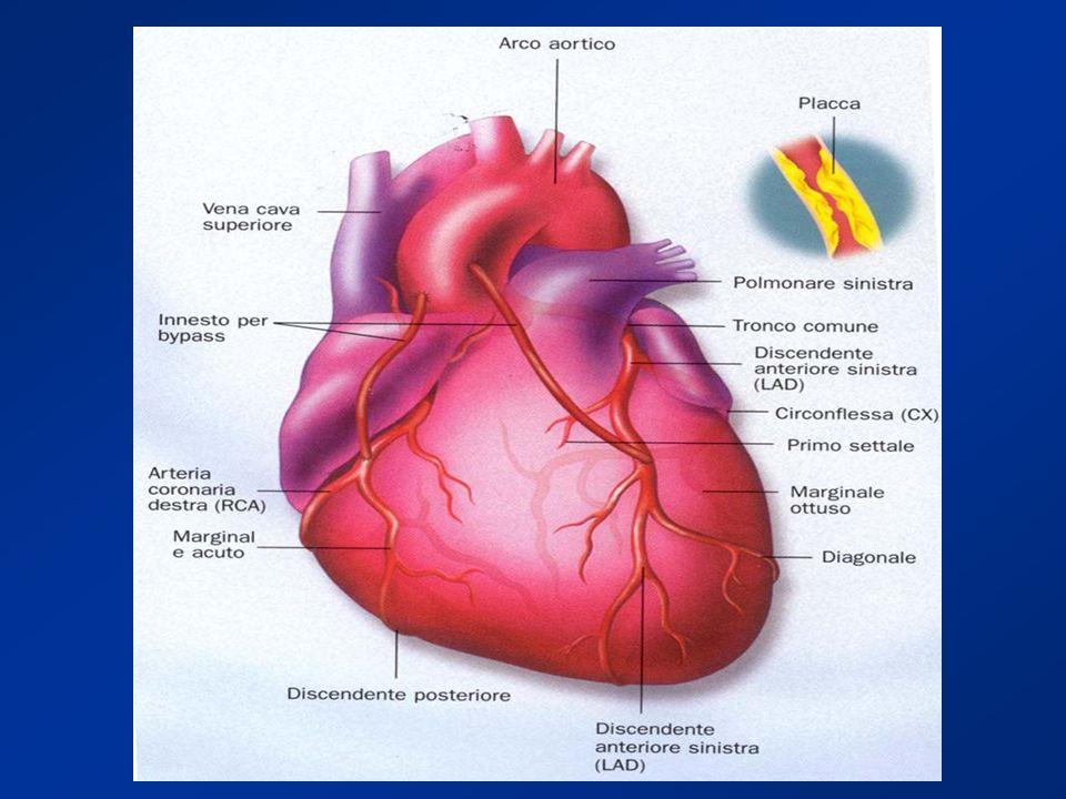 Il cuore ed il sistema circolatorio Come ogni altro muscolo il cuore ha bisogno di ossigeno per vivere e lavorare. Le arterie coronarie si diramano da