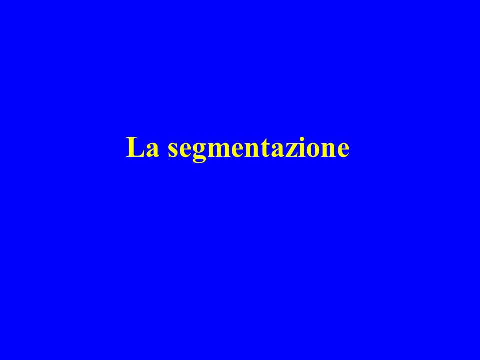 La segmentazione